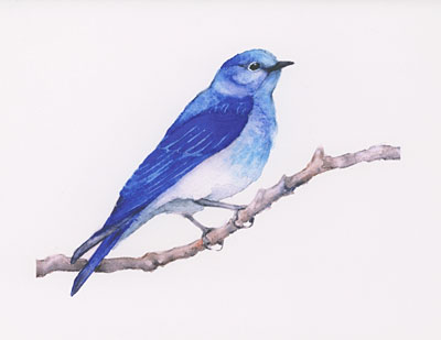 Mountain Bluebird watercolor note cards