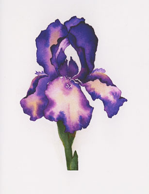Purple Iris watercolor note cards